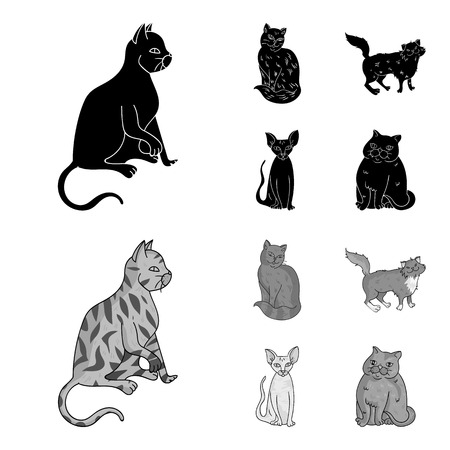 Sphinx, nibelung,norwegian forest cat and other species. Cat breeds set collection icons in black,monochrome style vector symbol stock illustration web.