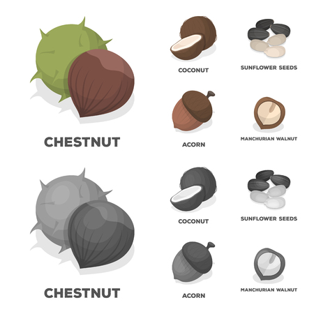 Coconut, acorn, sunflower seeds, manchueian walnut.Different kinds of nuts set collection icons in cartoon,monochrome style vector symbol stock illustration web.