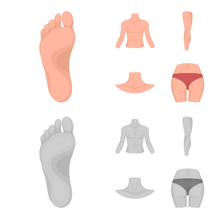 Torso, leg, neck and buttocks. Body parts set collection icons in cartoon,monochrome style vector symbol stock illustration web. 向量圖像