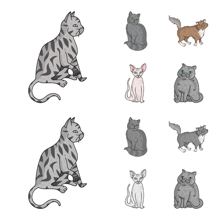 Sphinx, nibelung,norwegian forest cat and other species. Cat breeds set collection icons in cartoon,monochrome style vector symbol stock illustration web.