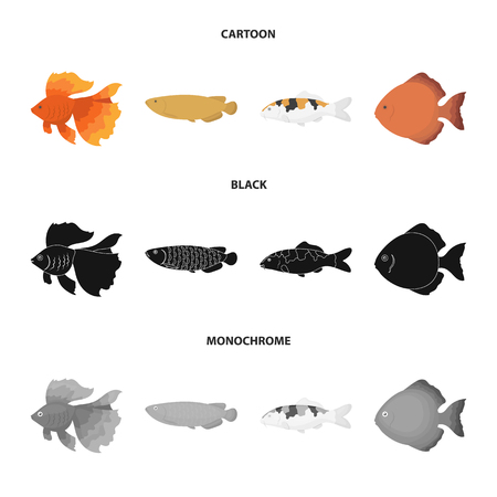 Discus, gold, carp, koi, scleropages, fotmosus.Fish set collection icons in cartoon,black,monochrome style vector symbol stock illustration web.