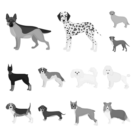 Dog breeds monochrome icons in set collection for design.Dog pet bitmap symbol stock web illustration. 版權商用圖片