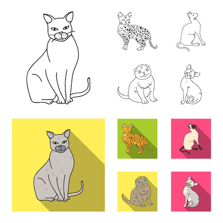 Siamese and other species. Cat breeds set collection icons in outline,flat style vector symbol stock illustration web.