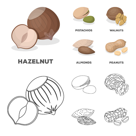 Hazelnut, pistachios, walnut, almonds.Different kinds of nuts set collection icons in cartoon,outline style bitmap symbol stock illustration web.