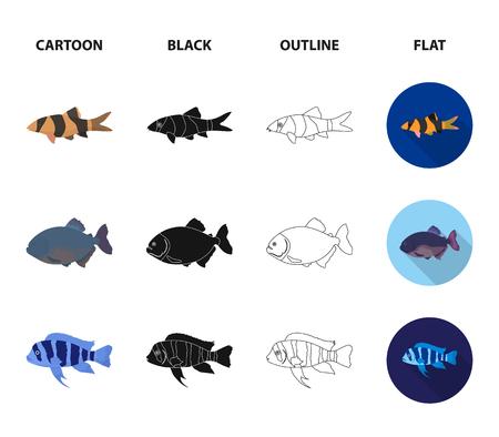 Botia, clown, piranha, cichlid, hummingbird, guppy,Fish set collection icons in cartoon,black,outline,flat style bitmap symbol stock illustration web.
