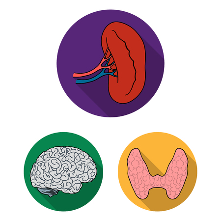 Human organs flat icons in set collection for design. Anatomy and internal organs bitmap symbol stock web illustration. Stock Photo