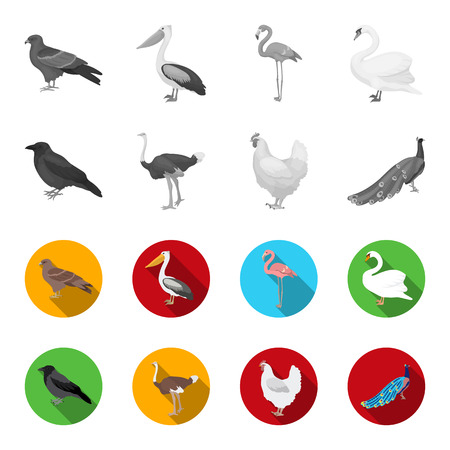 Crow, ostrich, chicken, peacock. Birds set collection icons in monochrome,flat style bitmap symbol stock illustration web.