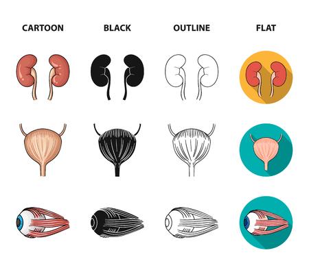 Kidney, bladder, eyeball, tongue. Human organs set collection icons in cartoon,black,outline,flat style vector symbol stock illustration . Vektorgrafik