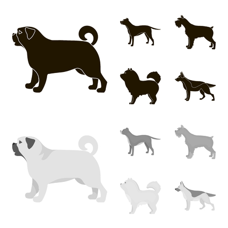 Pit bull, german shepherd, chow chow, schnauzer. Dog breeds set collection icons in black,monochrome style vector symbol stock illustration web.