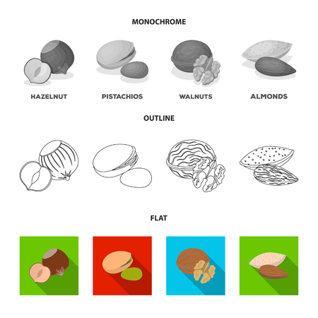 Hazelnut, pistachios, walnut, almonds.Different kinds of nuts set collection icons in flat,outline,monochrome style vector symbol stock illustration web.