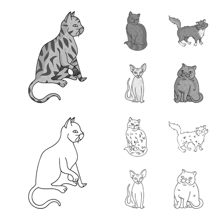 Sphinx, nibelung,norwegian forest cat and other species. Cat breeds set collection icons in outline,monochrome style vector symbol stock illustration web.