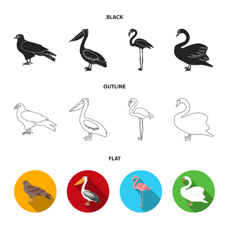Kite, pelican, flamingo, swan. Birds set collection icons in cartoon style vector symbol stock illustration web.
