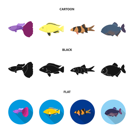 Botia, clown, piranha, cichlid, hummingbird, guppy,Fish set collection icons in cartoon,black,flat style bitmap symbol stock illustration web.