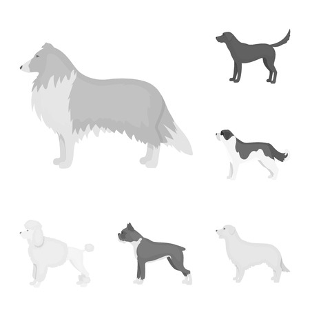 Dog breeds monochrome icons in set collection for design.Dog pet vector symbol stock web illustration.