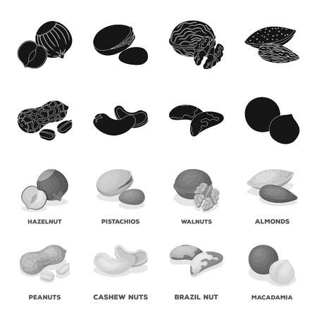 Peanuts, cashews, brazil nuts, macadamia.Different kinds of nuts set collection icons in black,monochrome style bitmap symbol stock illustration web.