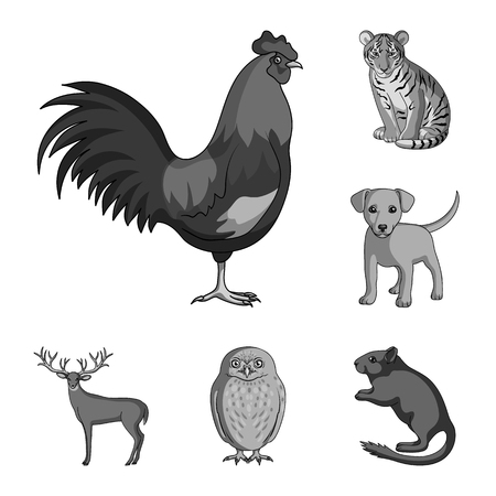 Realistic animals monochrome icons in set collection for design. Wild and domestic animals vector symbol stock  illustration. Çizim