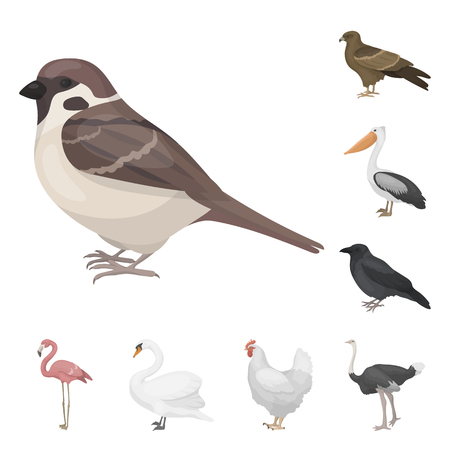 Types of birds cartoon icons in set collection for design. Home and wild bird vector symbol stock  illustration. Illustration