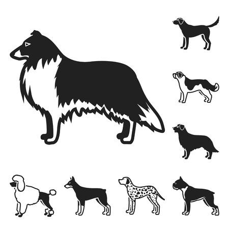 Dog breeds black icons in set collection for design.Dog pet bitmap symbol stock web illustration.