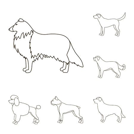 Dog breeds outline icons in set collection for design.Dog pet vector symbol stock illustration.