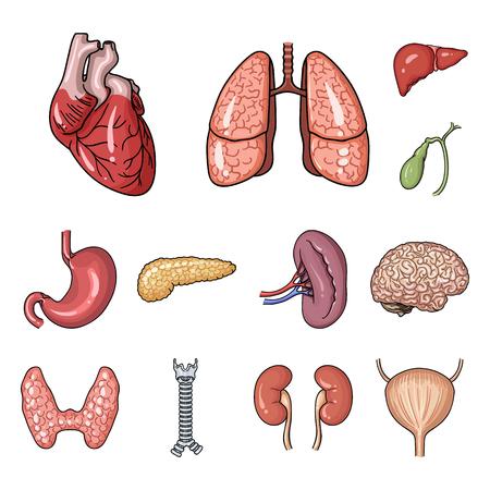 Órganos humanos iconos de dibujos animados en conjunto para el diseño. Anatomía y órganos internos vector símbolo stock web ilustración.