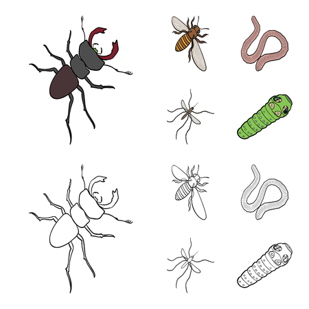 Arthropods insect mosquito, bee.Earth worm, caterpillar,vermicular set collection icons in cartoon,outline style bitmap symbol stock isometric illustration web. Stock Photo