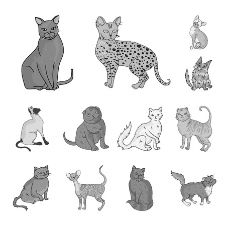 Breeds of cats monochrome icons in set collection for design. Pet cat bitmap symbol stock web illustration.