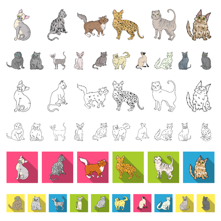 Breeds of cats cartoon icons in set collection for design. Pet cat vector symbol stock web illustration.