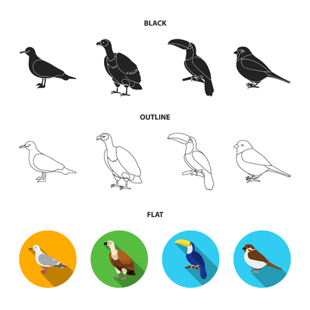 Gull, toucan and other species. Birds set collection icons in black,flat,outline style bitmap symbol stock illustration .