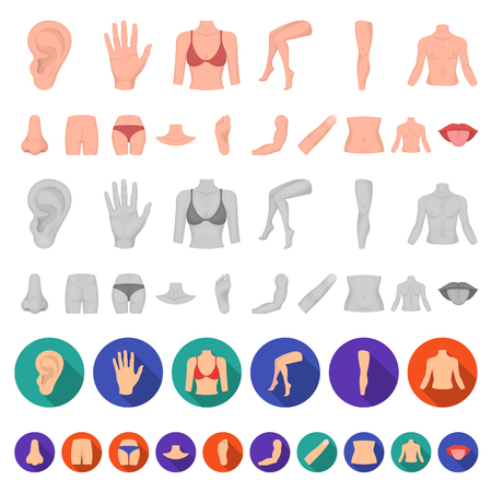 Part of the body, limb cartoon icons in set collection for design. Human anatomy vector symbol stock  illustration.
