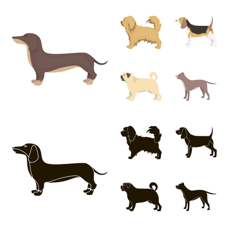 Pikinise, dachshund, pug, peggy. Dog breeds set collection icons in cartoon,black style bitmap symbol stock illustration web. Imagens