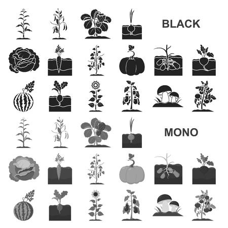 Plant, vegetable black icons in set collection for design. Garden and harvest vector symbol stock illustration. Vetores
