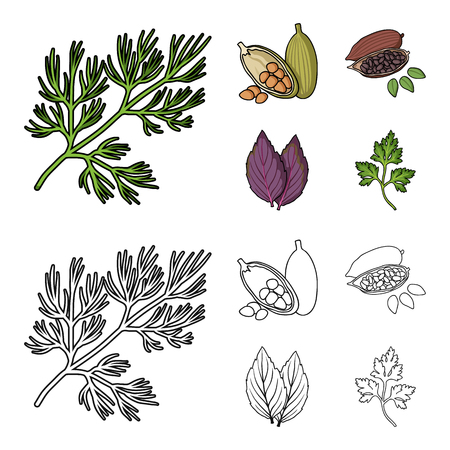 Dill, cocoa beans, basil.Herbs and spices set collection icons in cartoon,outline style bitmap symbol stock illustration flat.