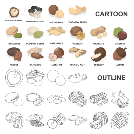 Different kinds of nuts cartoon icons in set collection for design.Nut Food vector symbol stock web illustration. Illustration