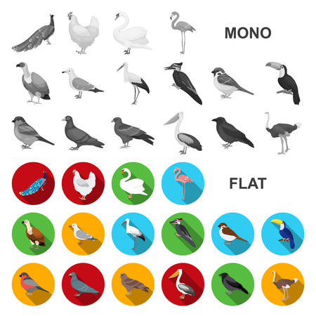 Types of birds flat icons in set collection for design. Home and wild bird vector symbol stock  illustration.