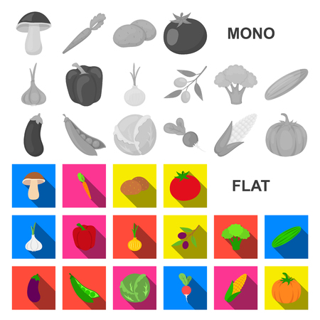 Different kinds of vegetables flat icons in set collection for design. Vegetables and vitamins vector symbol stock web illustration.