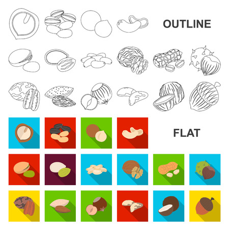 Different kinds of nuts flat icons in set collection for design.Nut Food vector symbol stock web illustration.