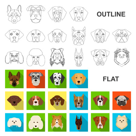 Dog breeds flat icons in set collection for design.Muzzle of a dog vector symbol stock web illustration.
