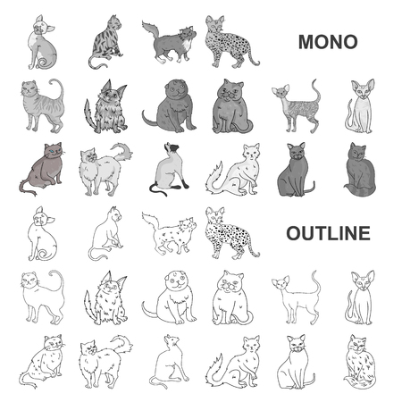 Breeds of cats monochrom icons in set collection for design. Pet cat vector symbol stock  illustration.