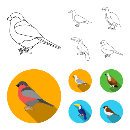 Gull, toucan and other species. Birds set collection icons in outline,flat style bitmap symbol stock illustration web. Stock Photo