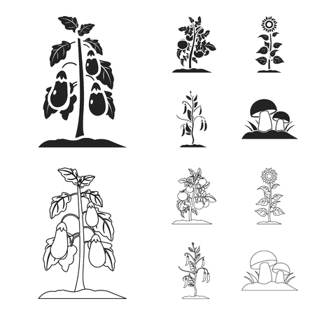 Eggplant, tomato, sunflower and peas.Plant set collection icons in black,outline style bitmap symbol stock illustration web.