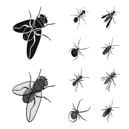 An insect arthropod, an osa, a spider, a cockroach. Insects set collection icons in black,monochrome style bitmap symbol stock isometric illustration web.