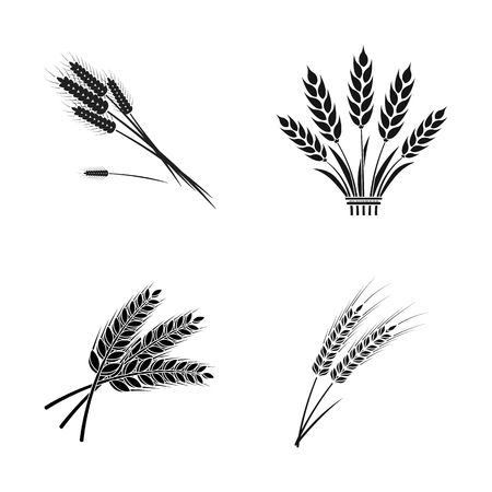Isolated object of wheat and stalk logo. Set of wheat and grain stock symbol for web.