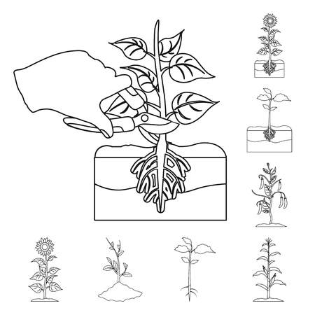 Vector design of plant and bean sign. Set of plant and process stock vector illustration. Illustration