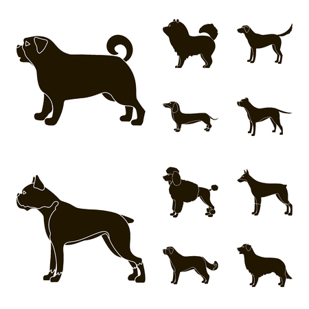 Vector illustration of cute and puppy symbol. Collection of cute and animal vector icon for stock.