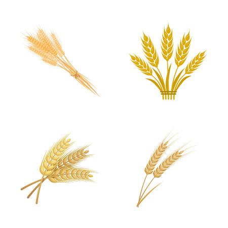 Ilustración de vector de icono de trigo y tallo. Colección de icono de vector de trigo y grano para stock.