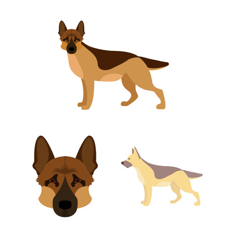 Vector design of  and sheepdog icon. Set of  and german vector icon for stock.