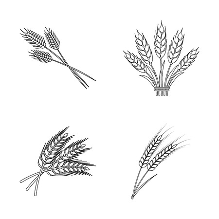 Vector illustration of wheat and stalk sign. Collection of wheat and grain stock vector illustration. 向量圖像