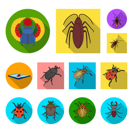 Vector design of insect and beetle icon. Collection of insect and halloween vector icon for stock. Illustration