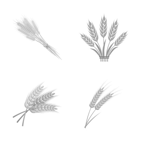 Vector illustration of wheat and stalk sign. Collection of wheat and grain stock symbol for web. 向量圖像