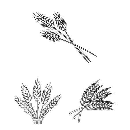 Vector illustration of wheat and stalk icon. Set of wheat and grain stock vector illustration. Ilustracja